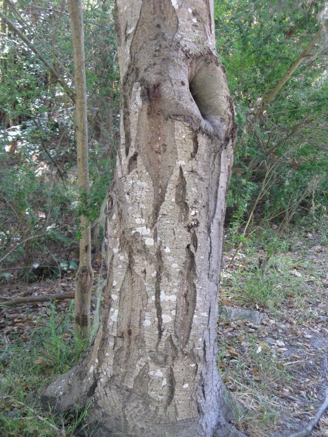 Oak 4 a